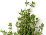Thyme - The (extra) healthy herb
