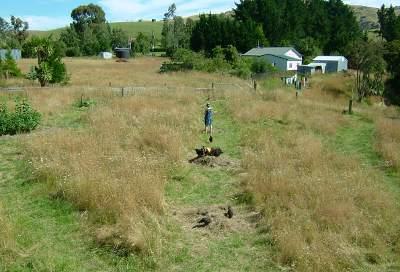 Chooks for weeding and soil enhancement