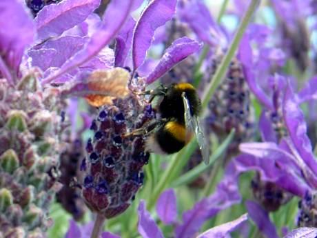 Bumble bee sanctuary
