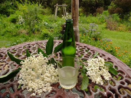 Elderflower 'champagne'