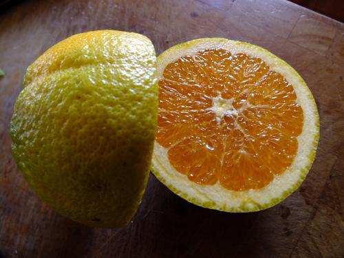 Blood Navel Orange