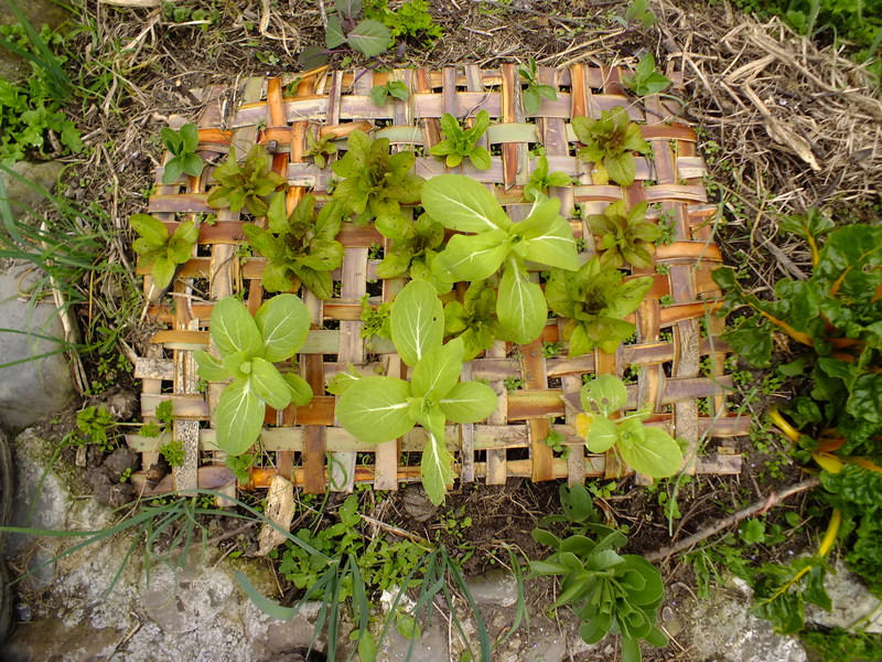 Natural woven flax weed mat