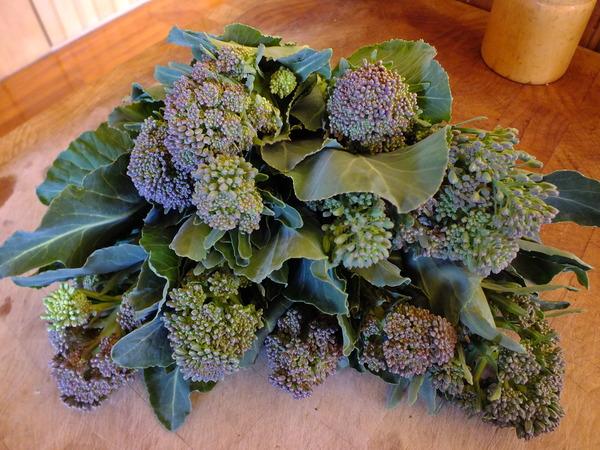 Perennial Brassica from the forest garden