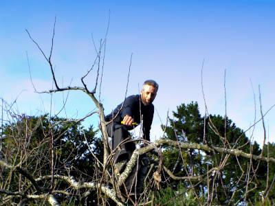 Winter fruit tree pruning
