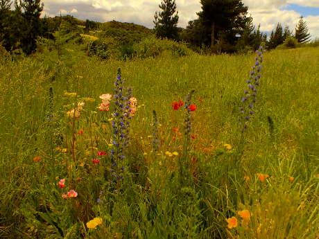Wild-flowers spreading