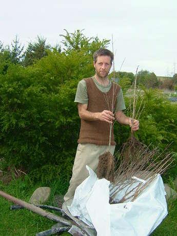 Batch tree planting 2013