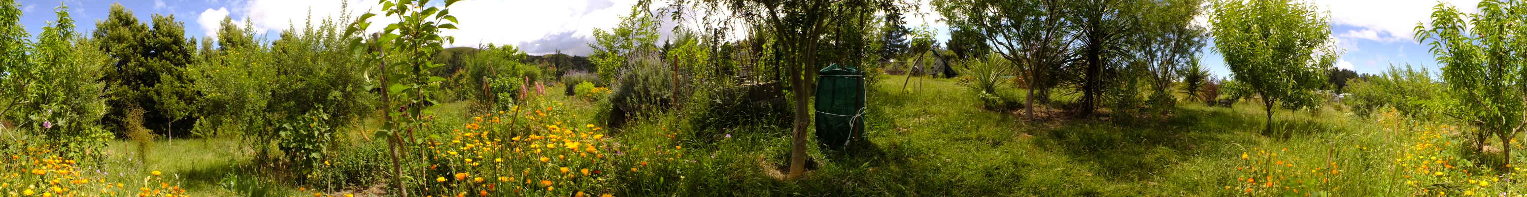 3 years old food forest