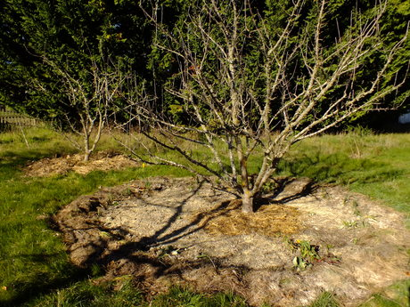 Converting an existing orchard to food forest