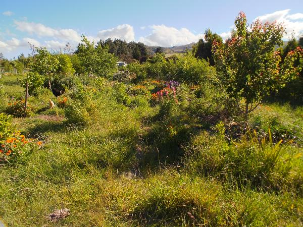 Food forest video tour
