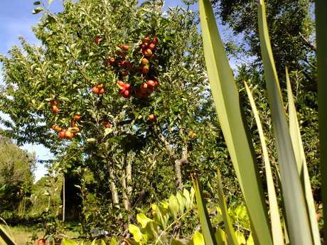 food forest - gardening the permaculture way